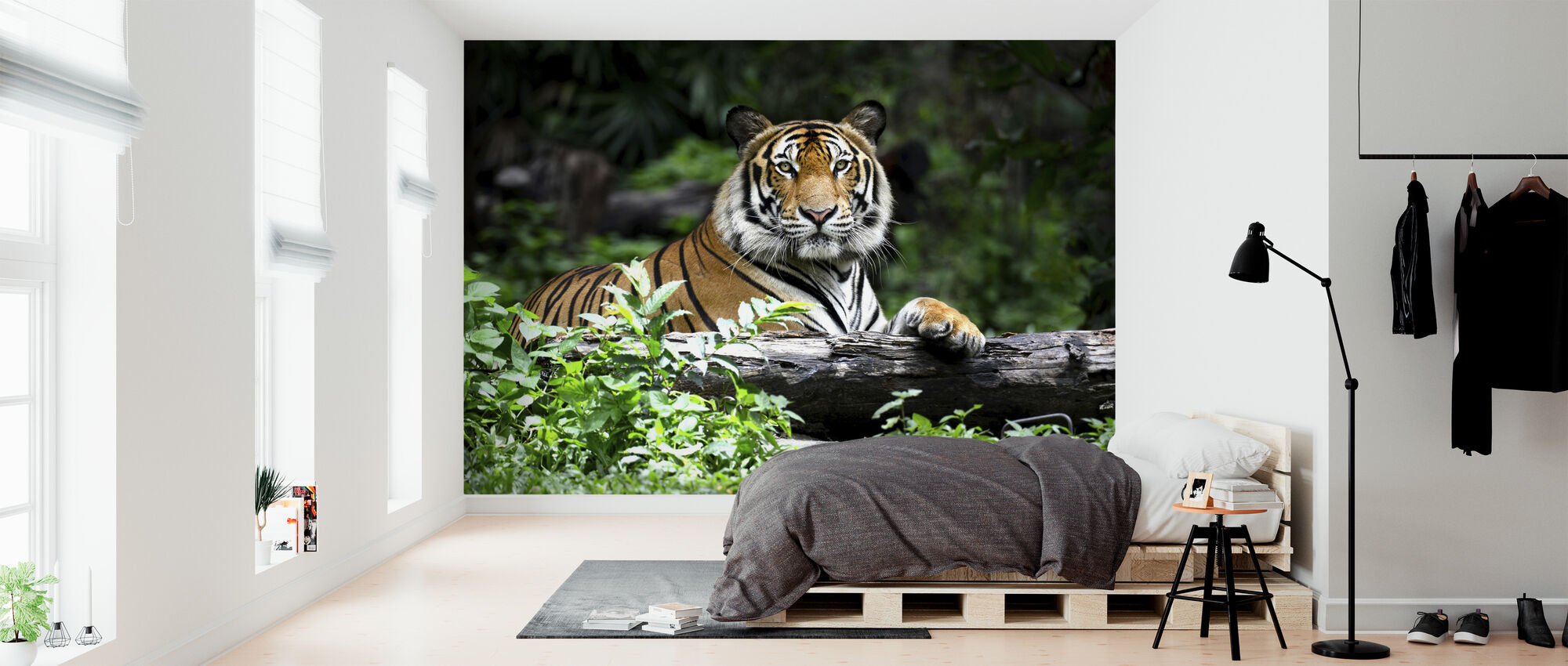 Bengal Tiger - Wallpaper - Bedroom