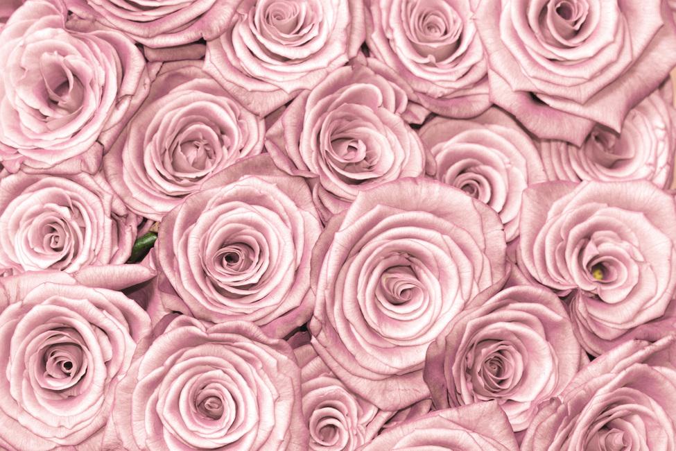 Wall of Roses Fototapeter & Tapeter 100 x 100 cm