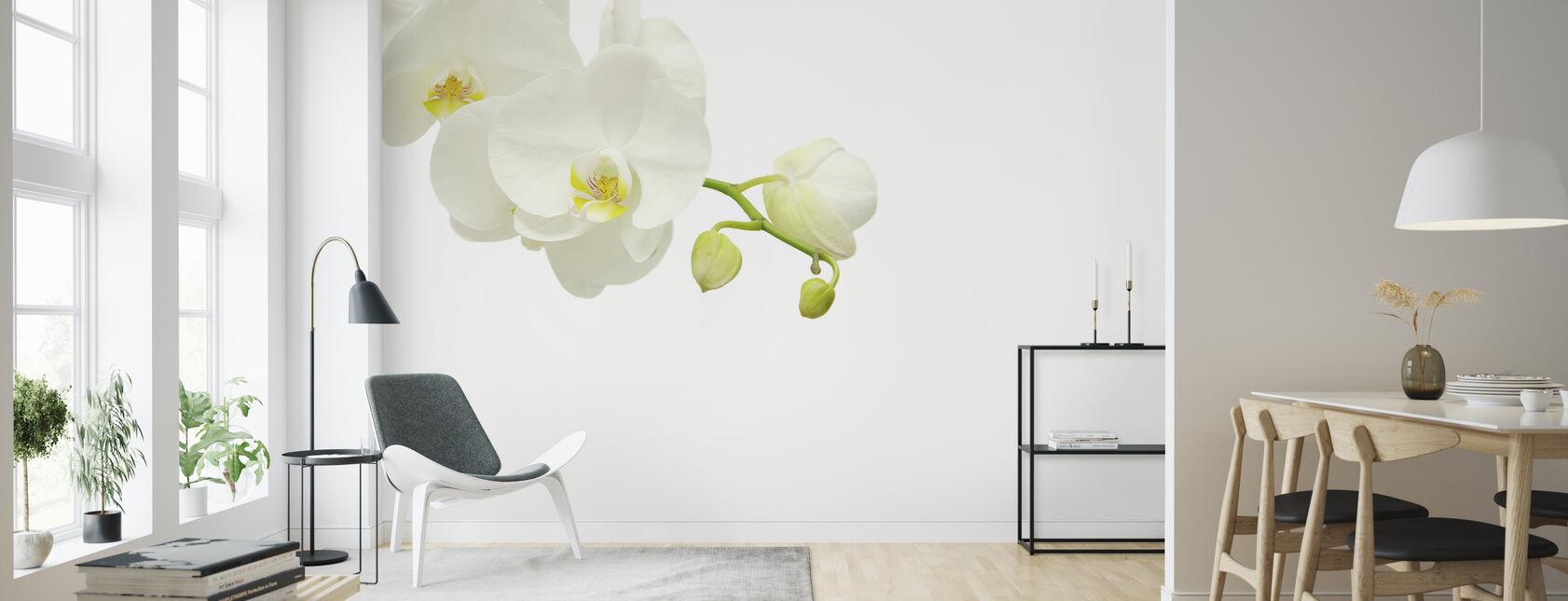 Hvid Elegant Orkidé - Tapet - Stue