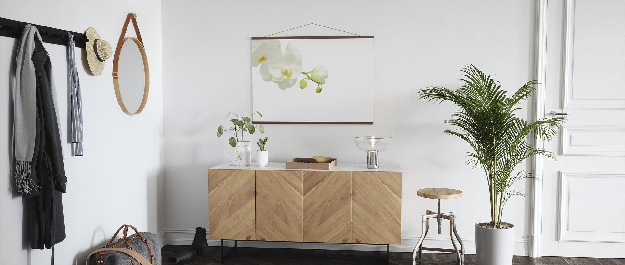 Valkoinen tyylikäs orkidea - Juliste - Aula