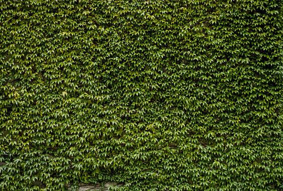 Green Wall Murals Modern Wall Murals Photowall