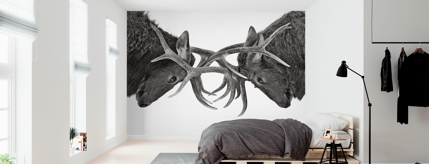 Öga mot öga - Elk kamp, svart och vitt - Tapet - Sovrum