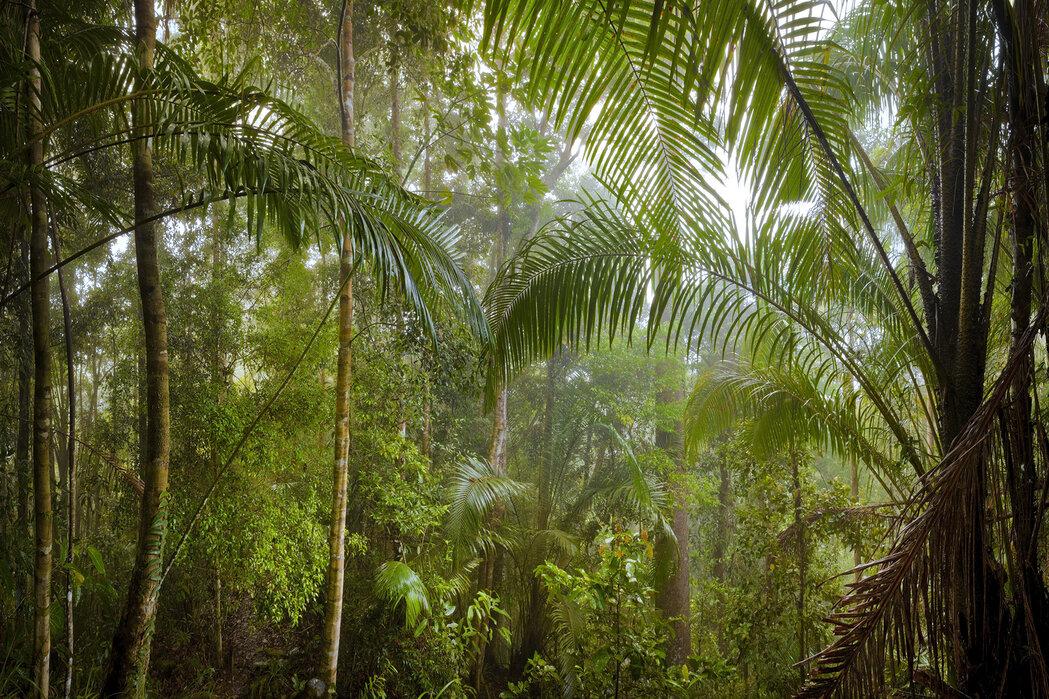 Borneo Tropical Rainforest Sfeervolle Canvasprints Photowall