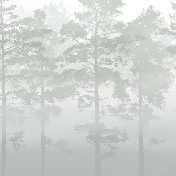 misty pine forest fototapete nach ma photowall. Black Bedroom Furniture Sets. Home Design Ideas