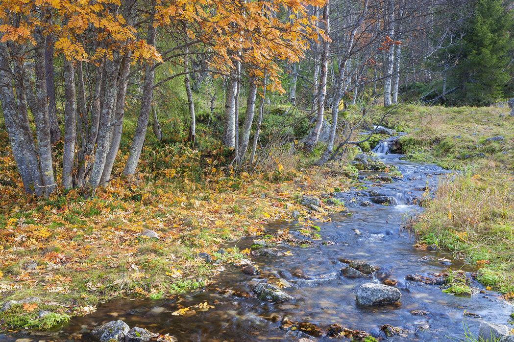 Autumn River - Canvas print