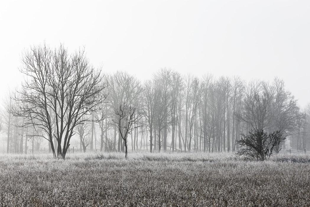 Frosty Morning, musta ja valkoinen - Canvastaulu