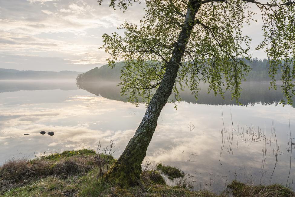 Beautiful Swedish Lake Fototapeter & Tapeter 100 x 100 cm