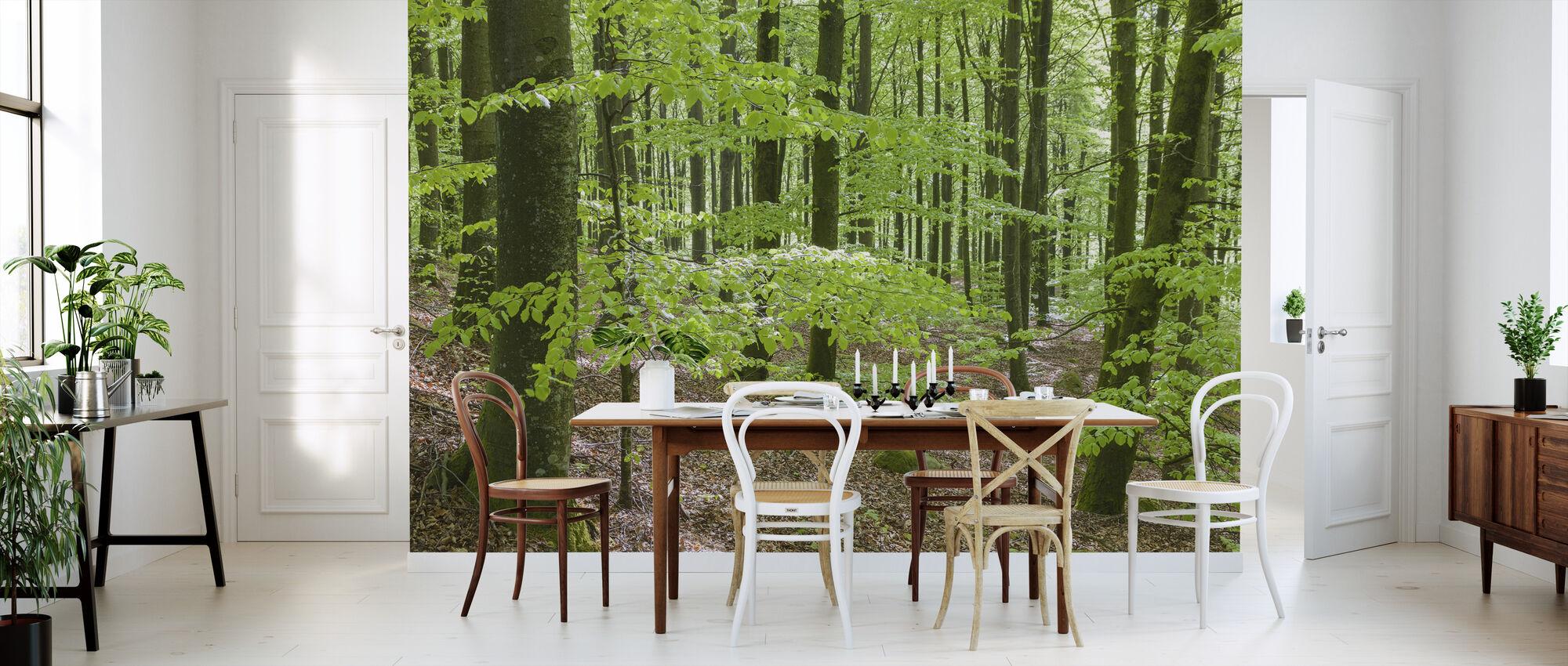 Green Beech Forest - Wallpaper - Kitchen