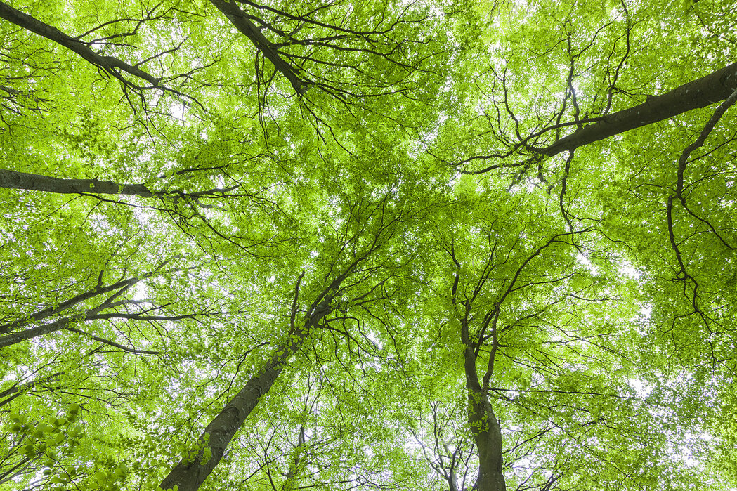 Image result for green tree in spring