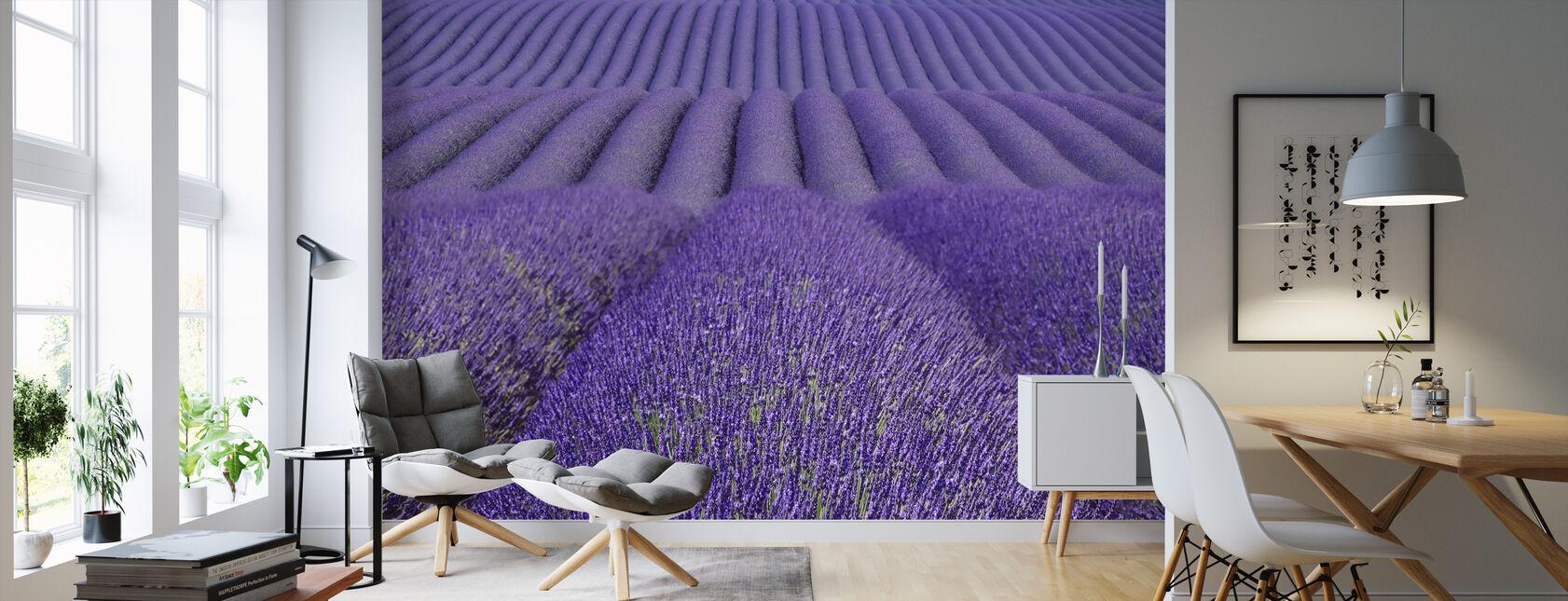 Purple Lavender Field - Wallpaper - Living Room