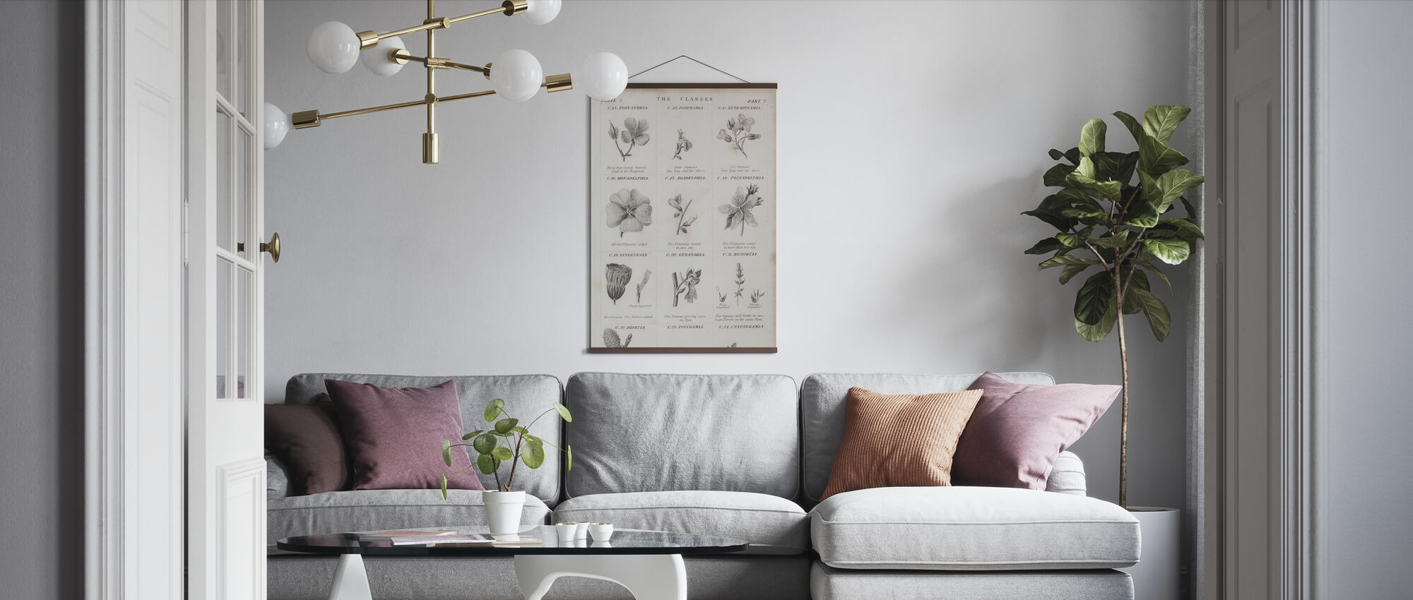 Botanical Chart - Poster - Living Room