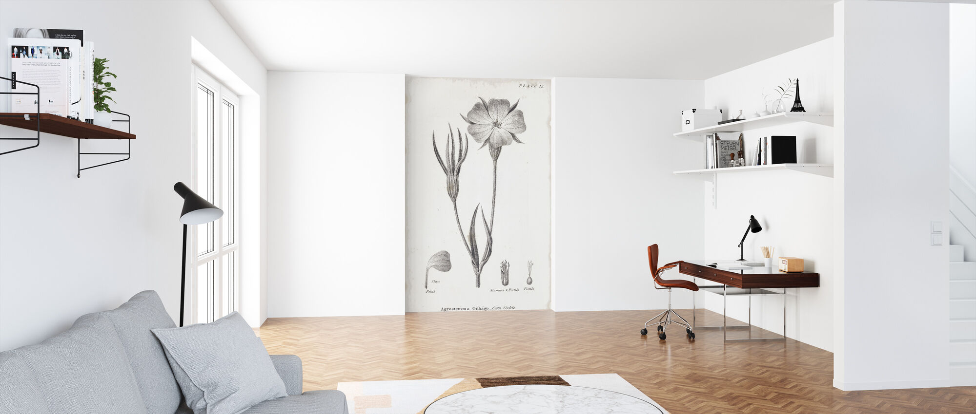 Botanical Chart - Corn Cockle - Wallpaper - Office