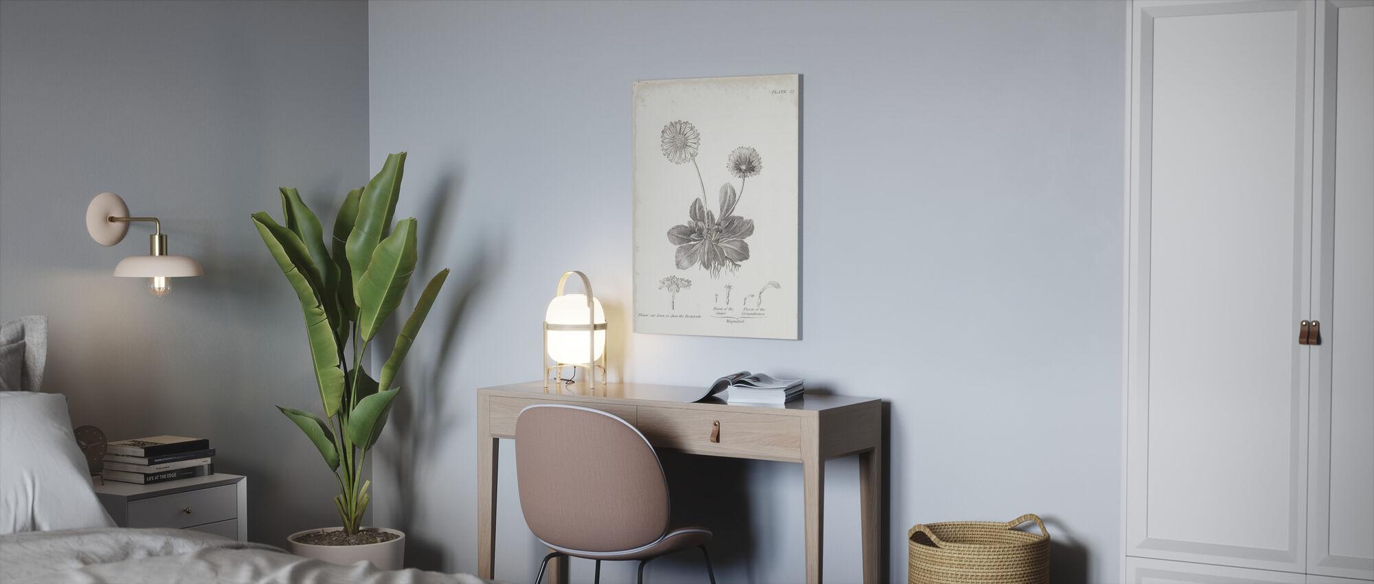 Botanische grafiek - Gemeenschappelijke Madeliefje - Canvas print - Kantoor