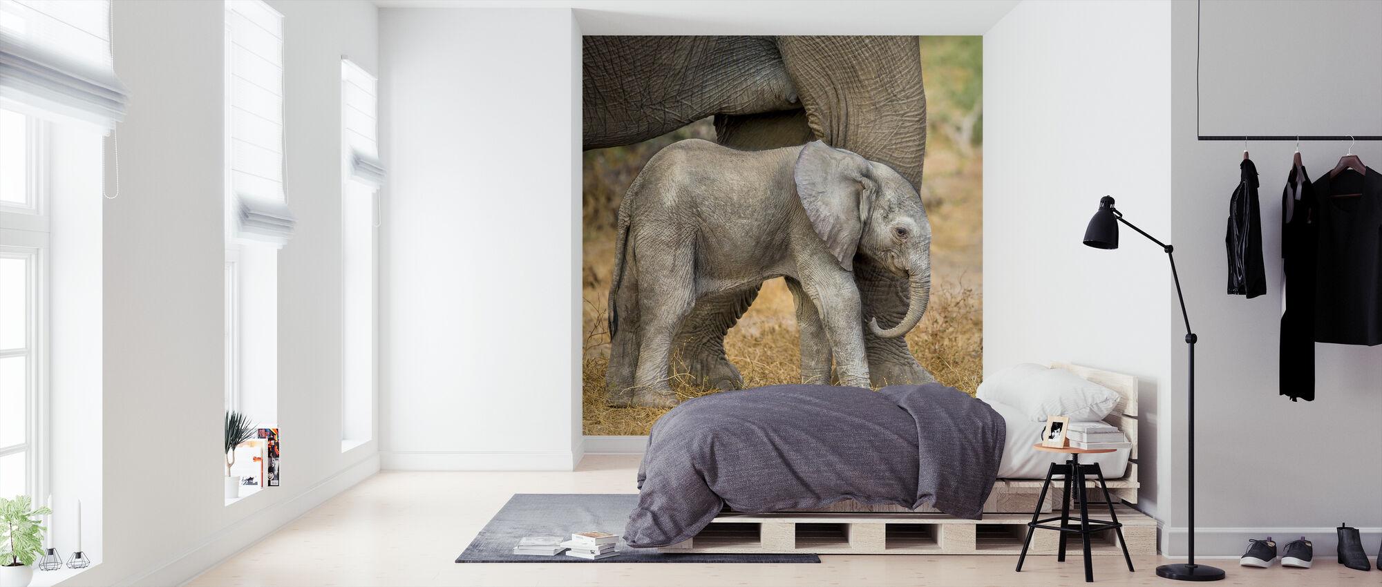 African Elephant Calf Next to Mother - Wallpaper - Bedroom