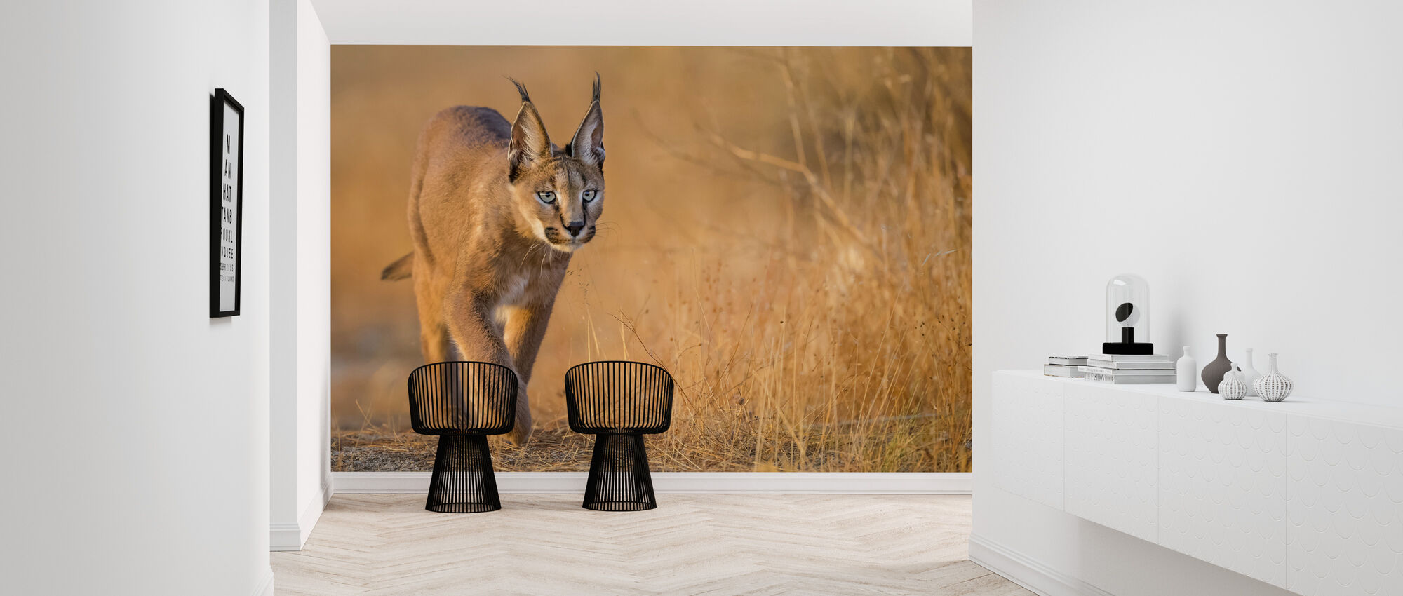 Caracal Walking, Zuid-Afrika - Behang - Gang
