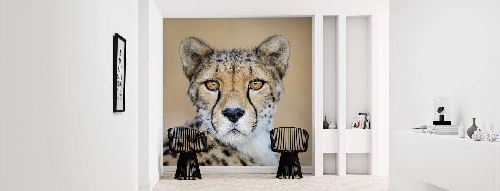Cheetah, Sydafrika - Tapet - Hall