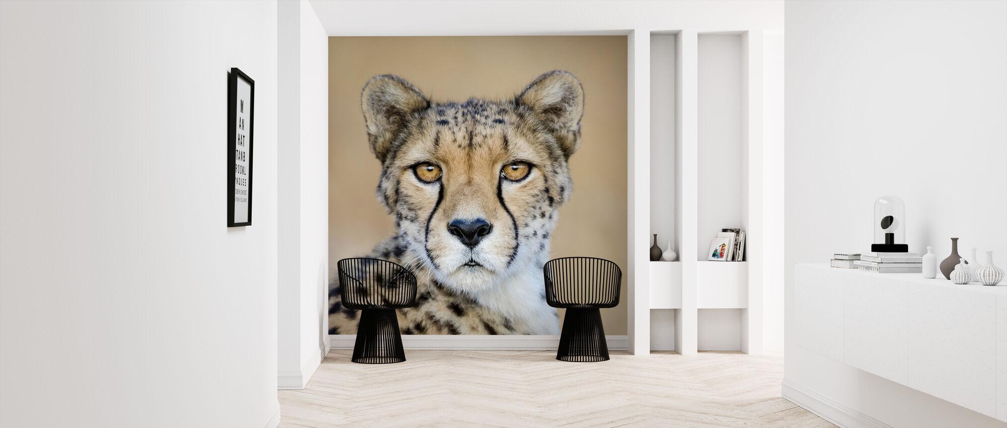 Cheetah, Zuid-Afrika - Behang - Gang