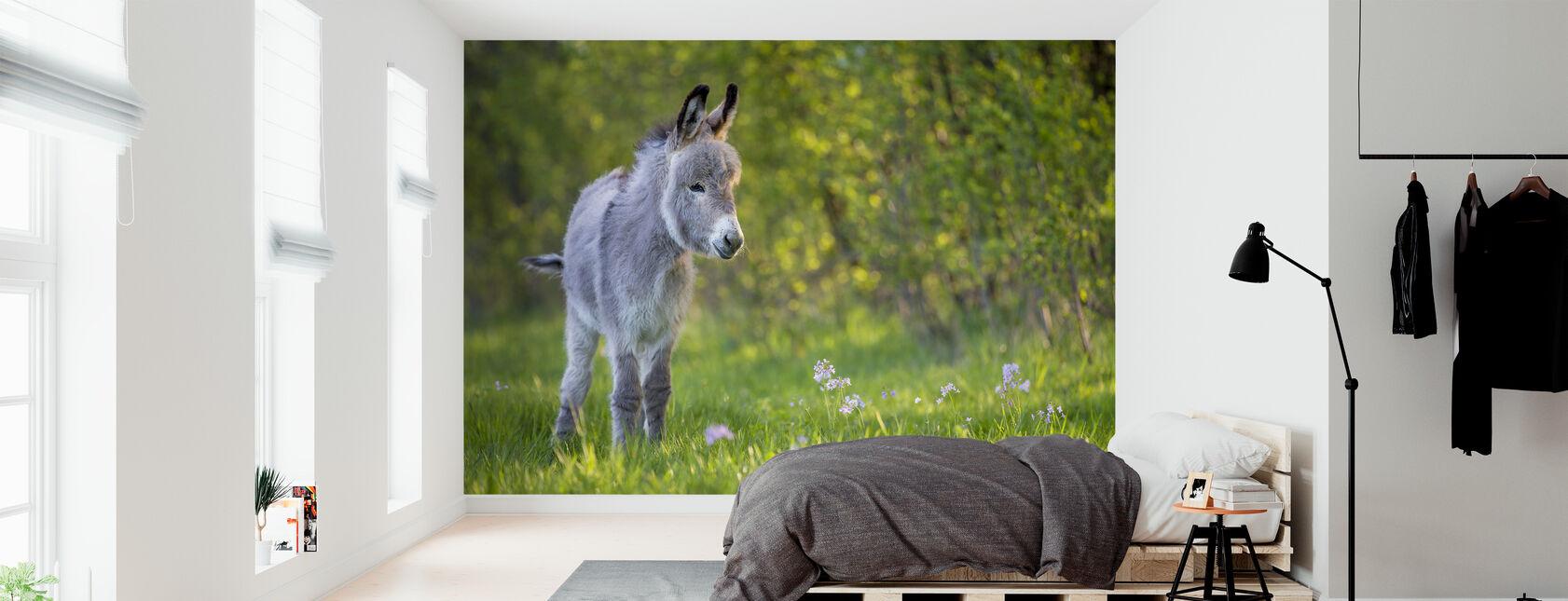 burro potro de pie en un prado - Papel pintado - Dormitorio