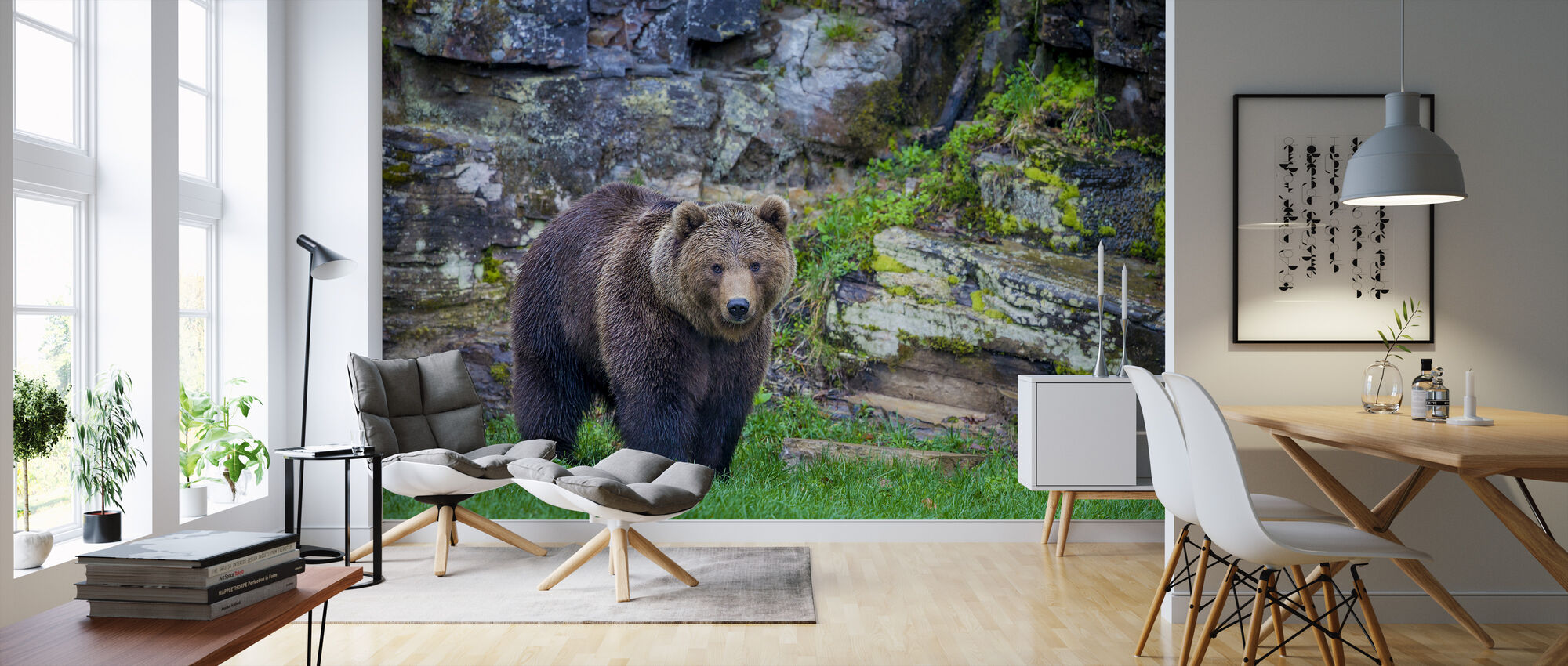 European Brown Bear, Pyrenees Mountains - Wallpaper - Living Room