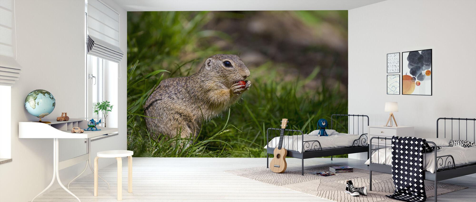 European Ground Squirrel - Wallpaper - Kids Room