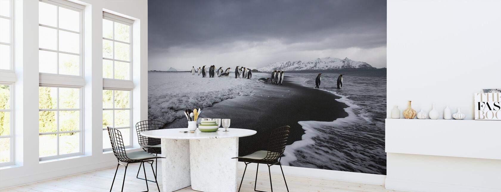 Group of King Penguins, Antarctica - Wallpaper - Kitchen