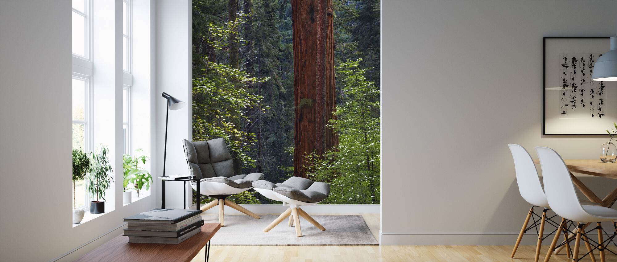 Pacific Dogwood Tree and Giant Sequoia, California - Wallpaper - Living Room