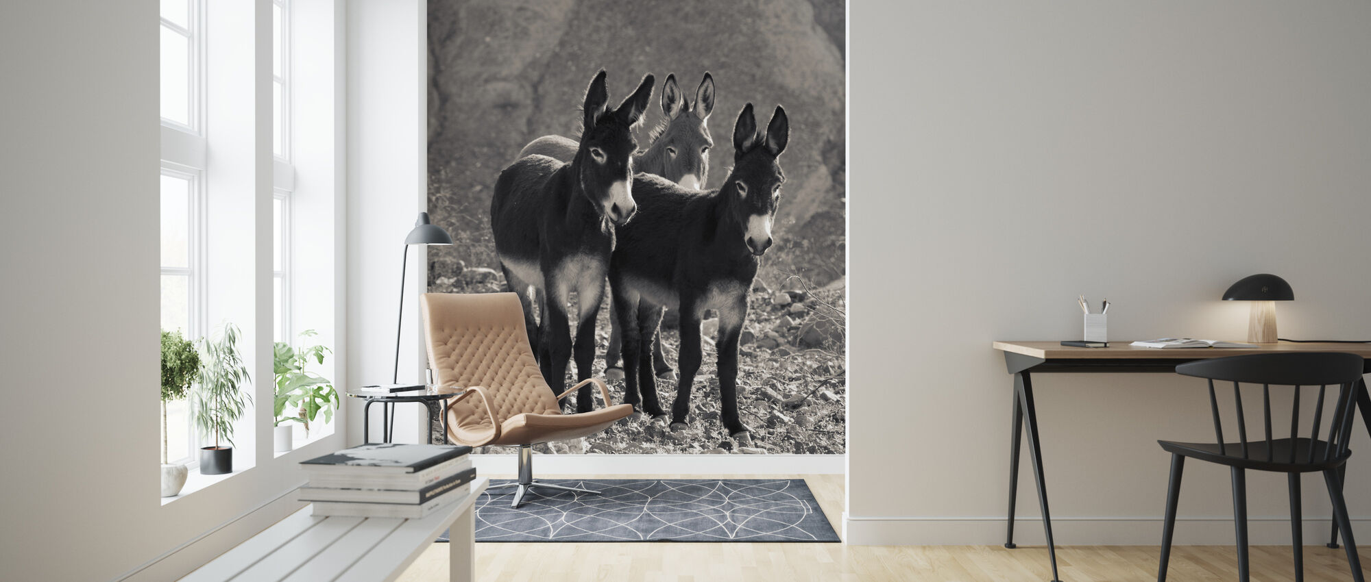 Wild Burros in a Canyon, Death Valley National Park - Wallpaper - Living Room