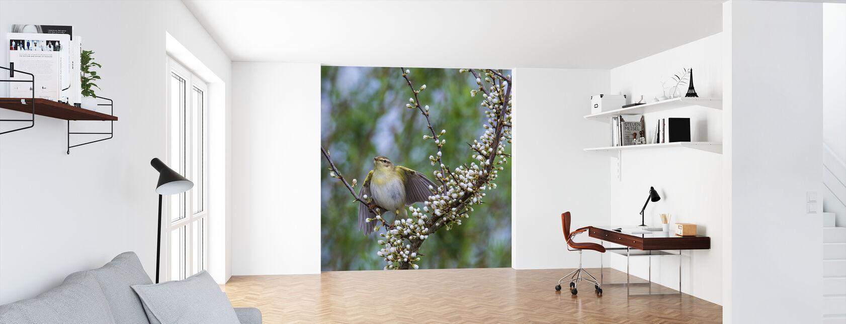 Trä Warbler i blommande Blackthorn Bush - Tapet - Kontor