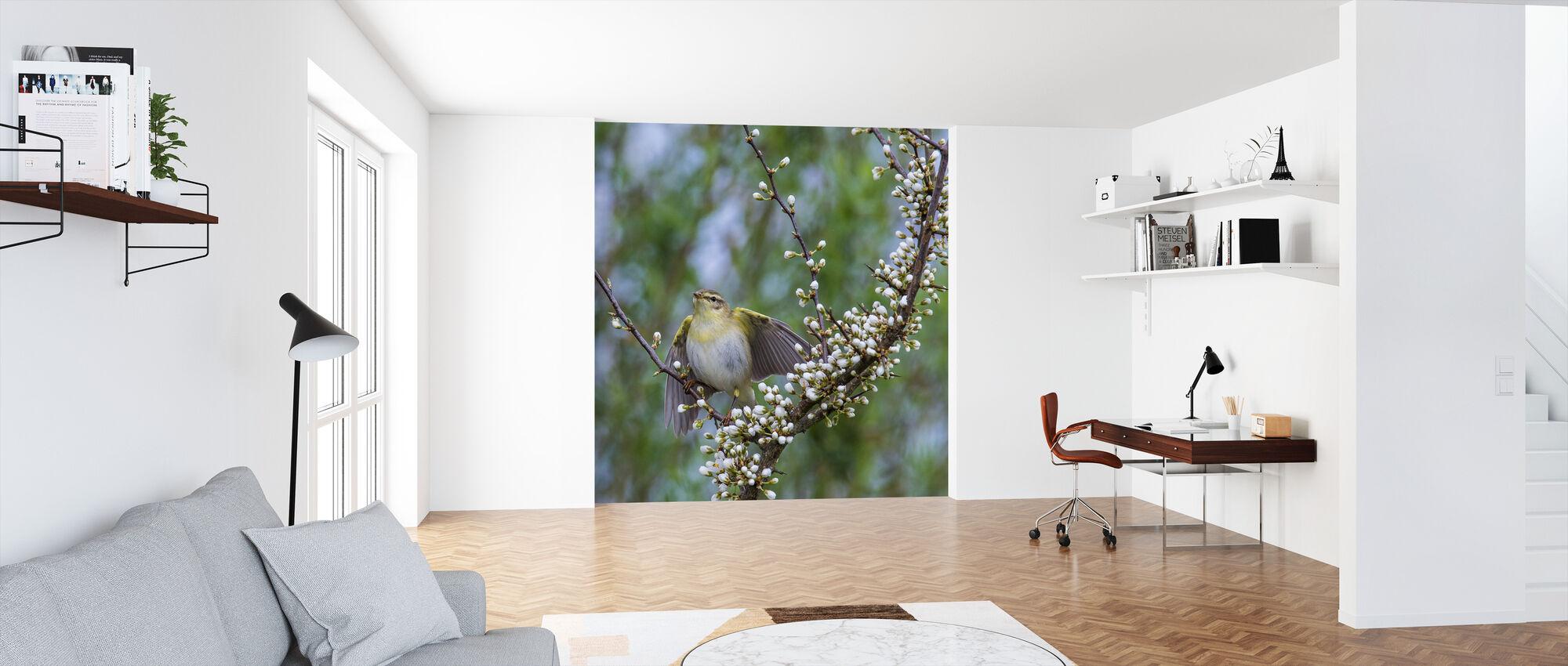 Wood Warbler in Flowering Blackthorn Bush - Wallpaper - Office