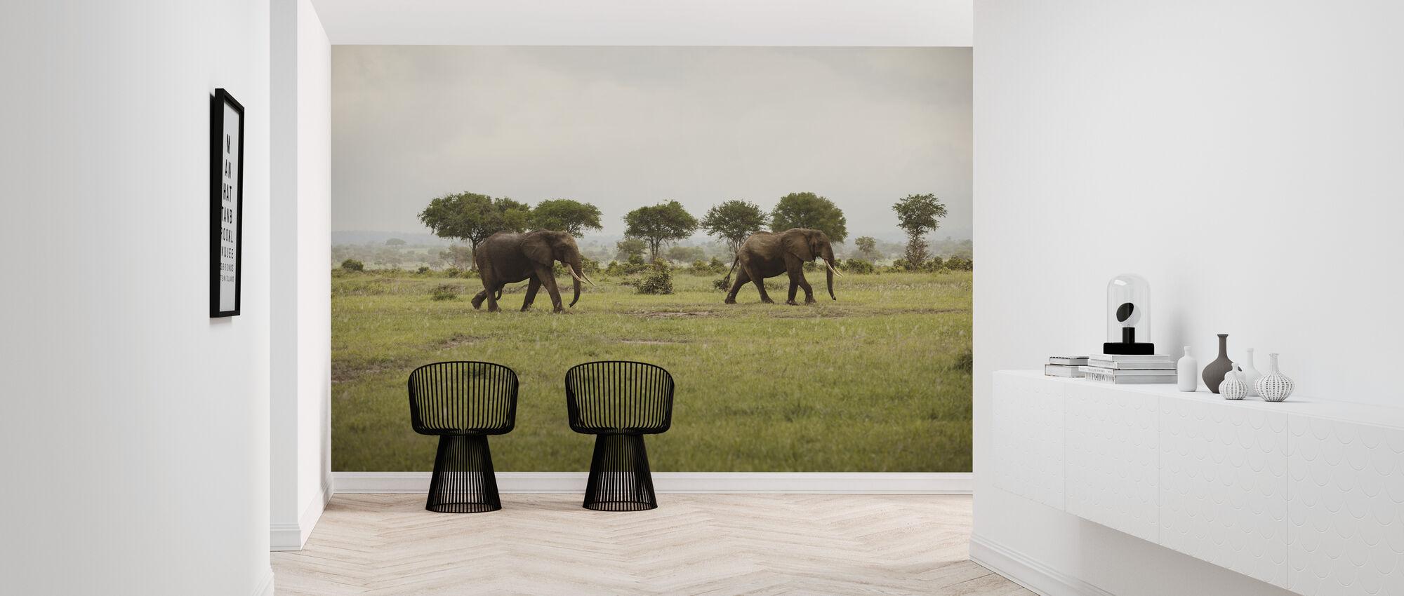 Elephants in National Park - Wallpaper - Hallway