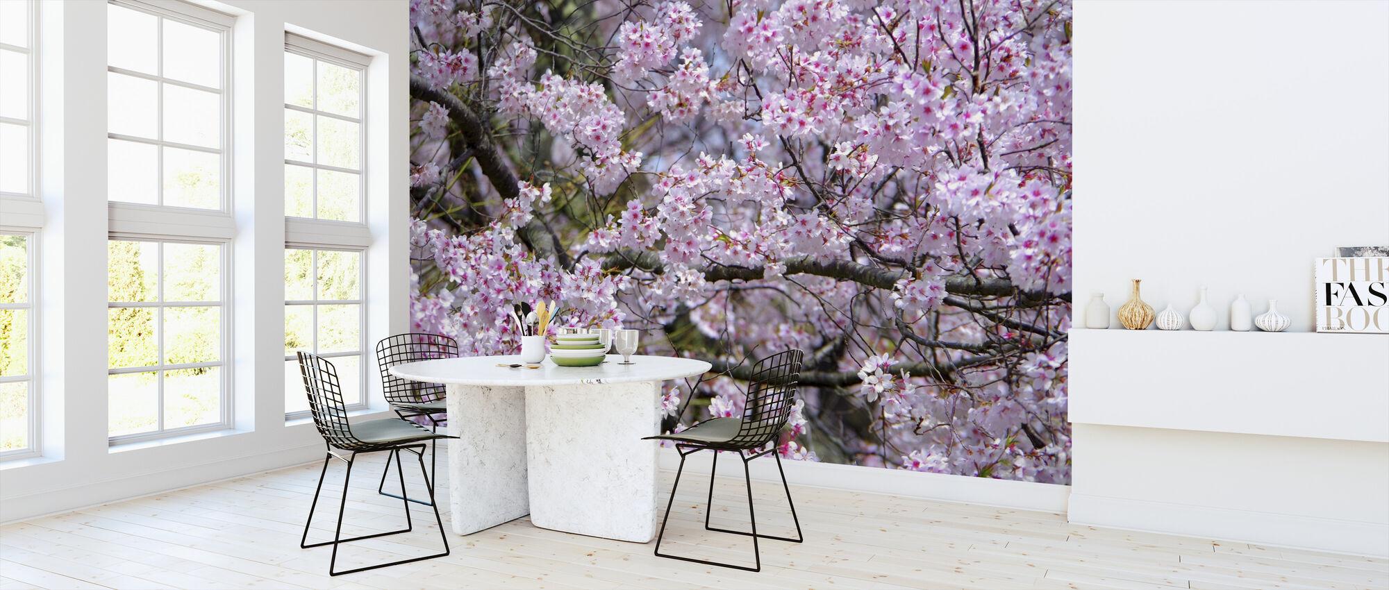 Kirsebærblomster - Tapet - Kjøkken