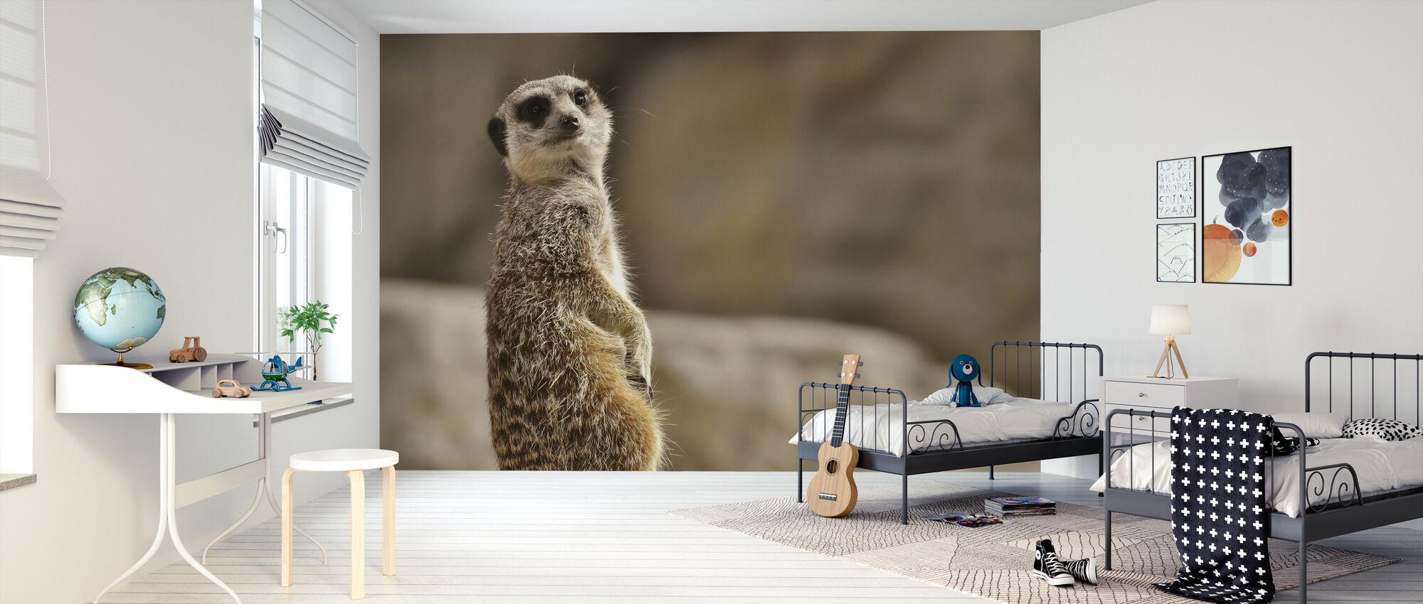 Meerkat in Tiergarten Zoo - Wallpaper - Kids Room