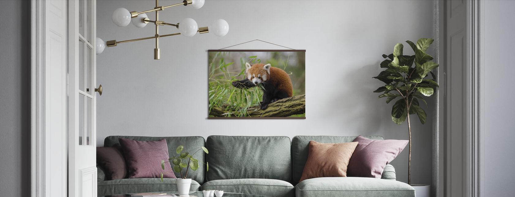 Lille Rød Panda - Plakat - Stue