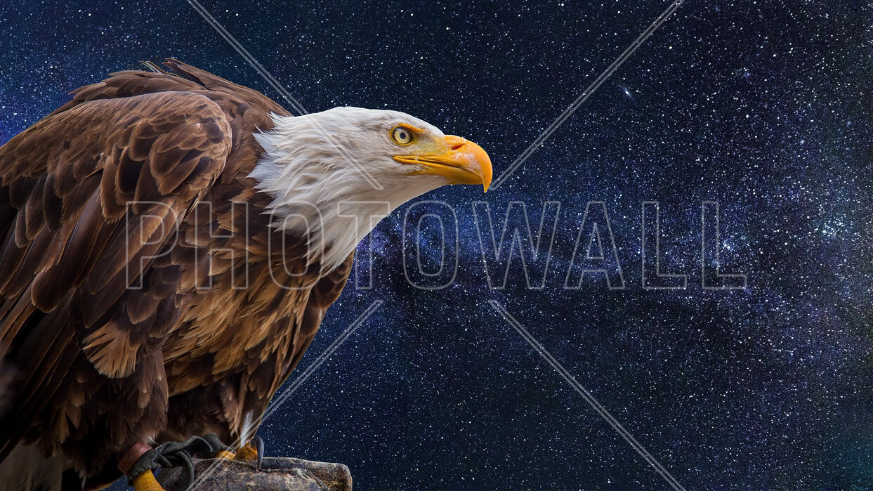 The Bald Eagle A Wall Mural For Every Room Photowall