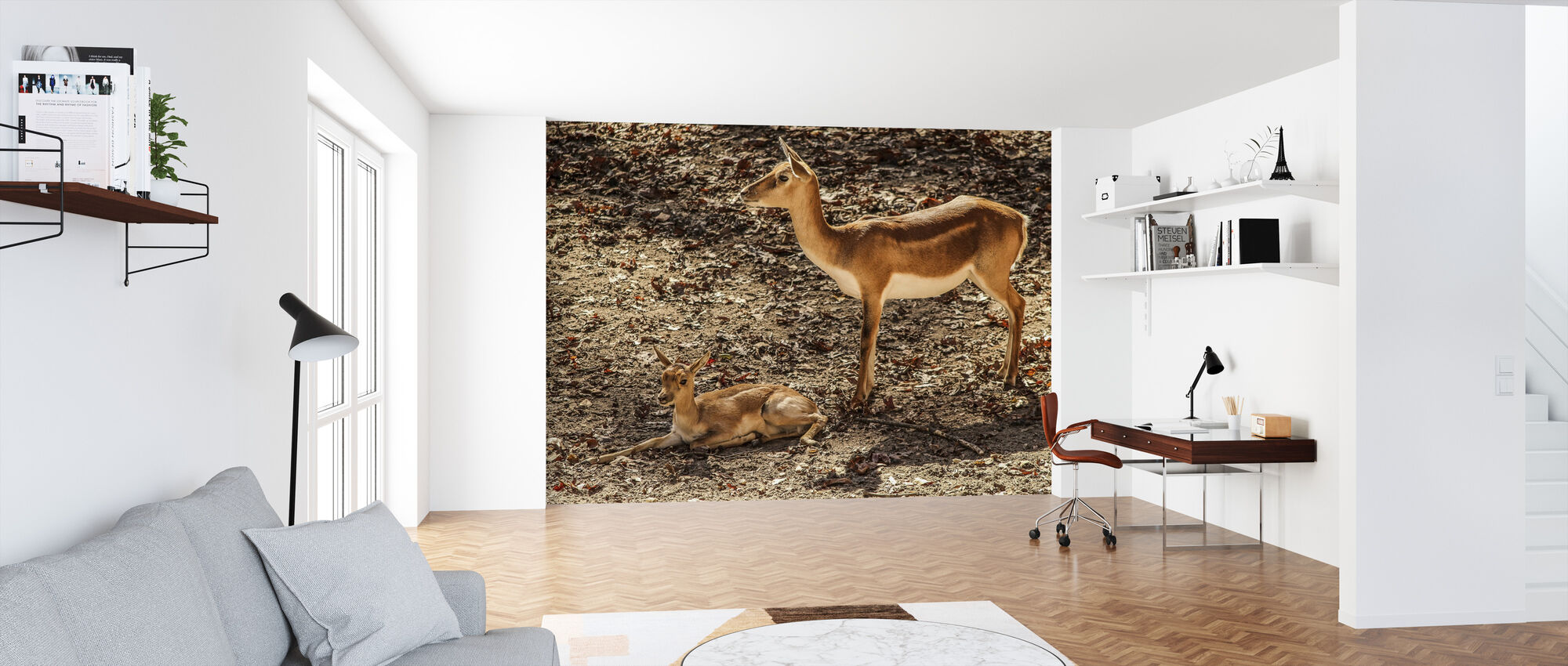 Gazelle Impala - Wallpaper - Office