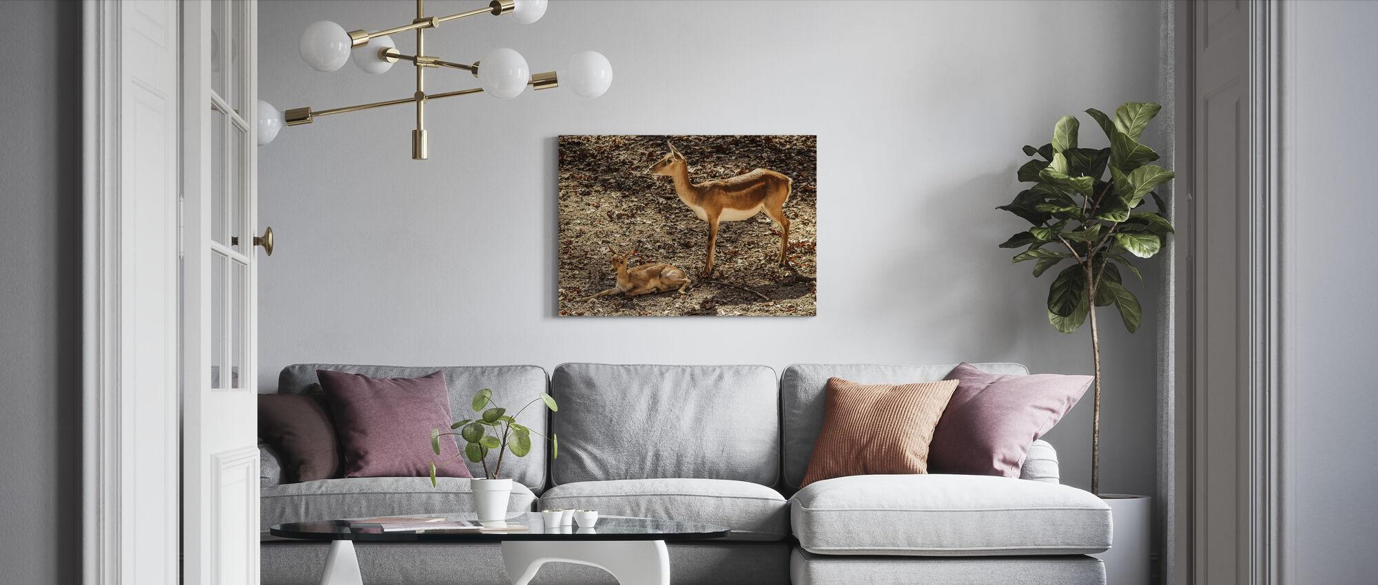 Gazelle Impala - Lerretsbilde - Stue