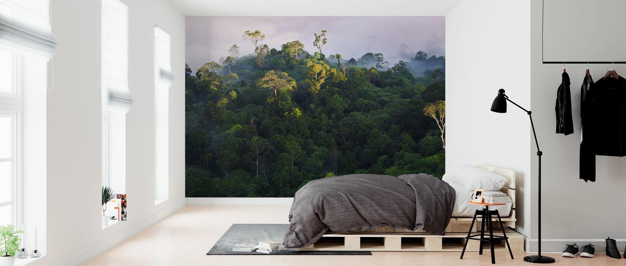 Sunrise at Lowland Rainforest - Wallpaper - Bedroom