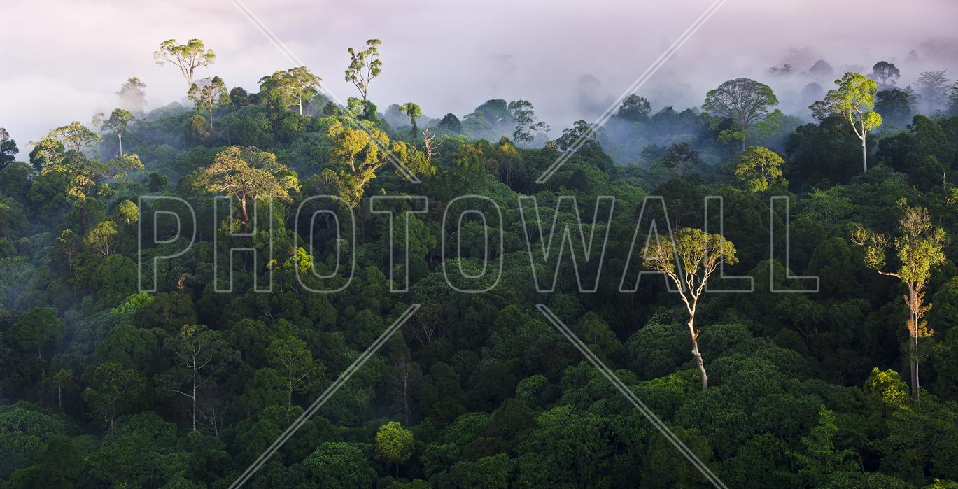 Leinwandbild Sonnenaufgang im Regenwald