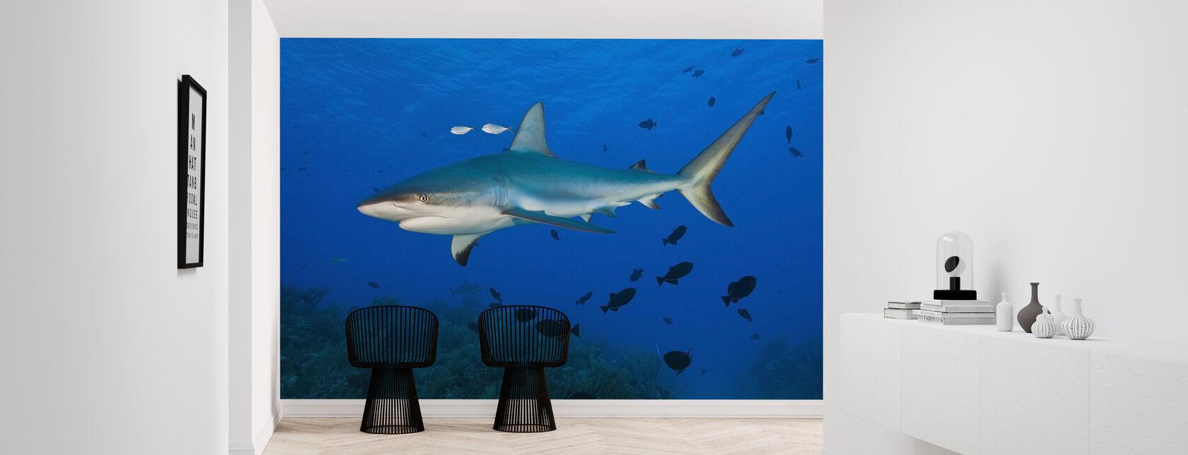 Caraïbische rif haai - Behang - Gang