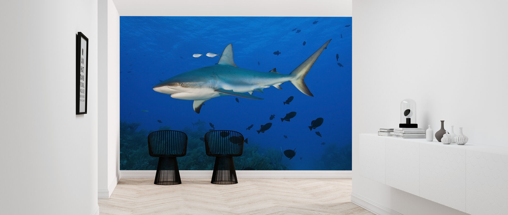 Caribbean Reef Shark - Wallpaper - Hallway