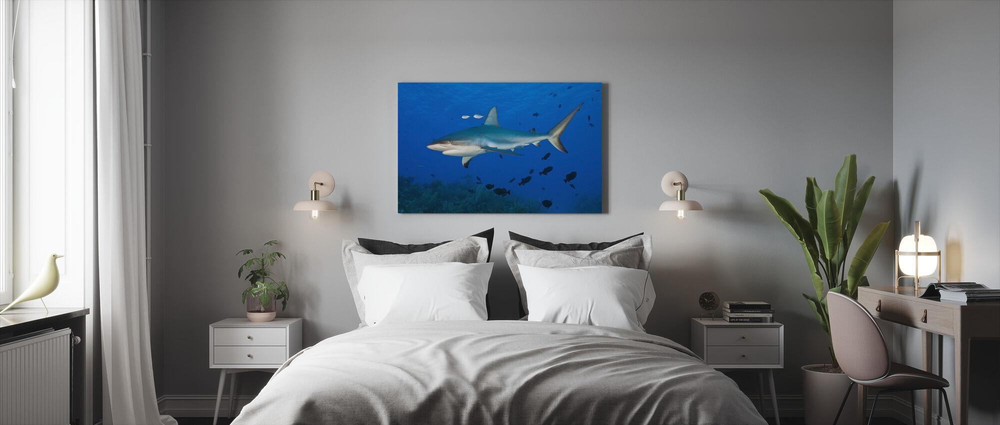 Karibian riuttahai - Canvastaulu - Makuuhuone