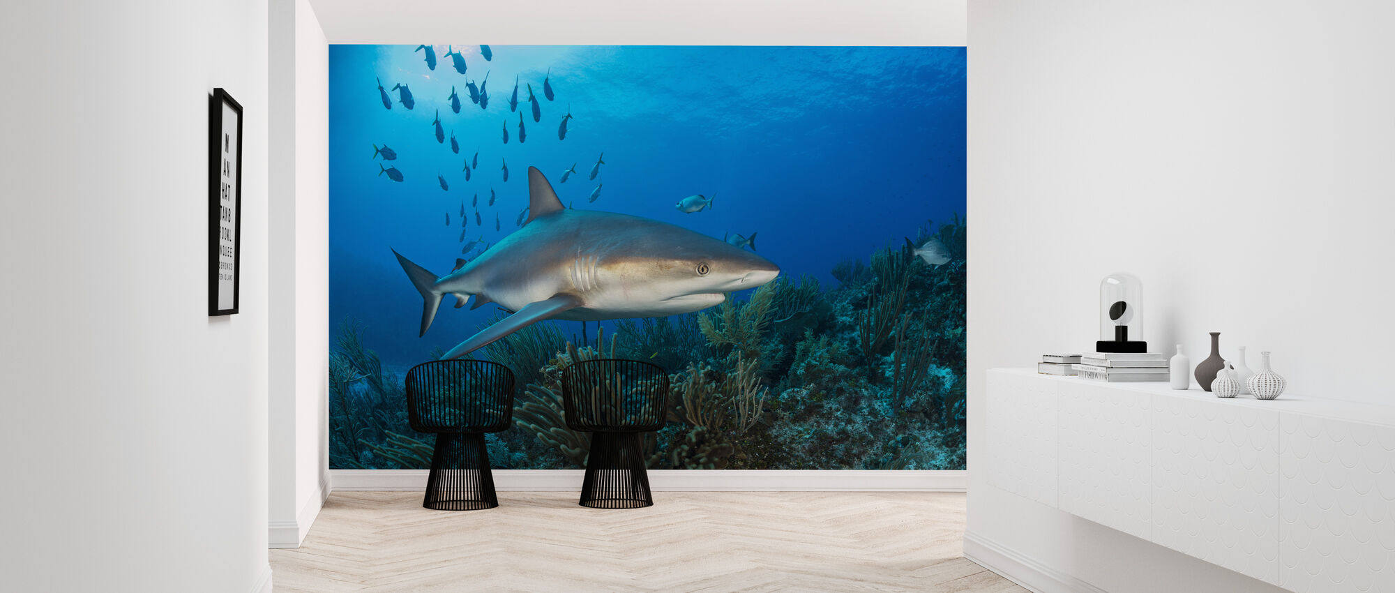 Caribbean Reef Shark - Wallpaper - Hallway