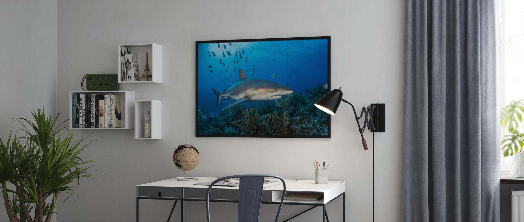 Caribbean Reef Shark - Framed print - Office