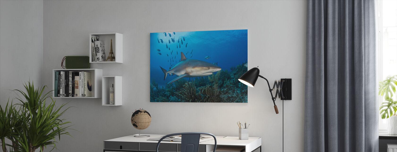 Caraïbische rif haai - Canvas print - Kantoor