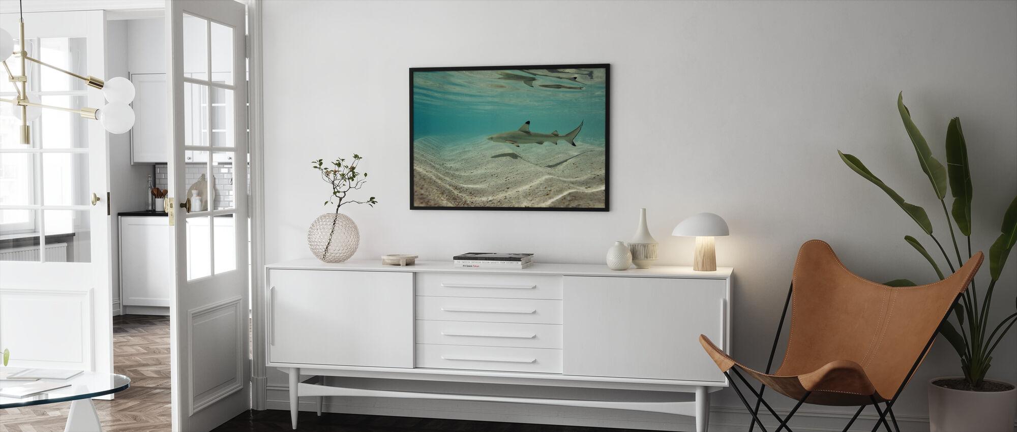 Blacktip Reef Shark - Framed print - Living Room