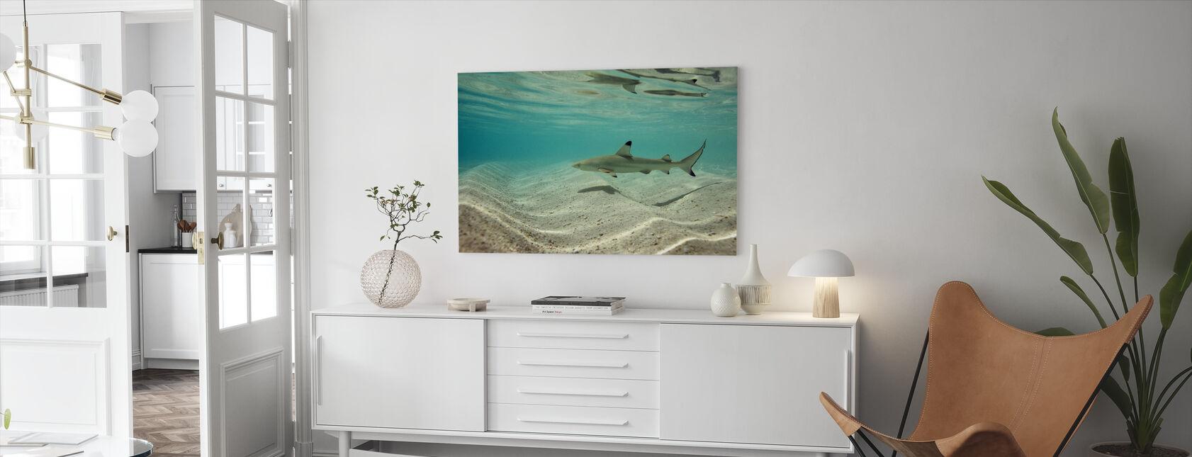 Svartspets Reef Shark - Canvastavla - Vardagsrum