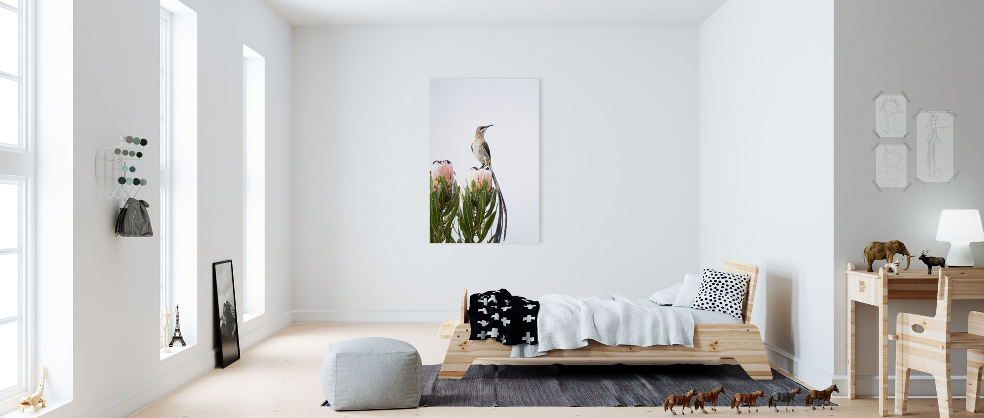 Cape Sugarbird - Canvas print - Kids Room