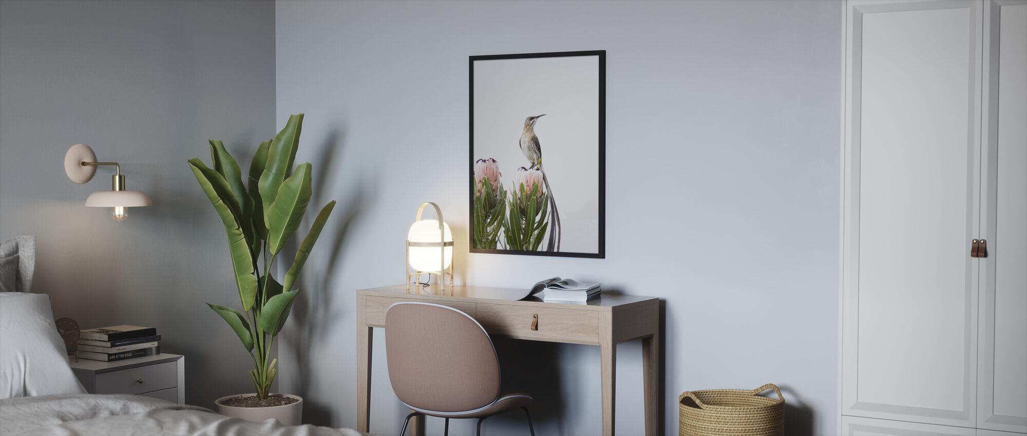 Cape Sugarbird - Innrammet bilde - Soverom