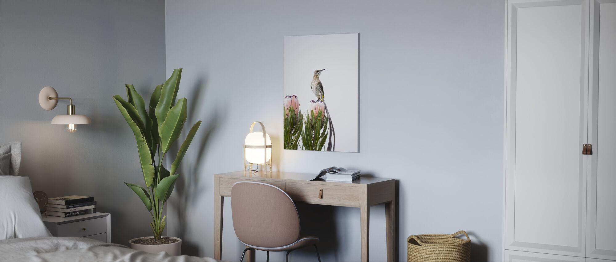 Cape Sugarbird - Canvas print - Office