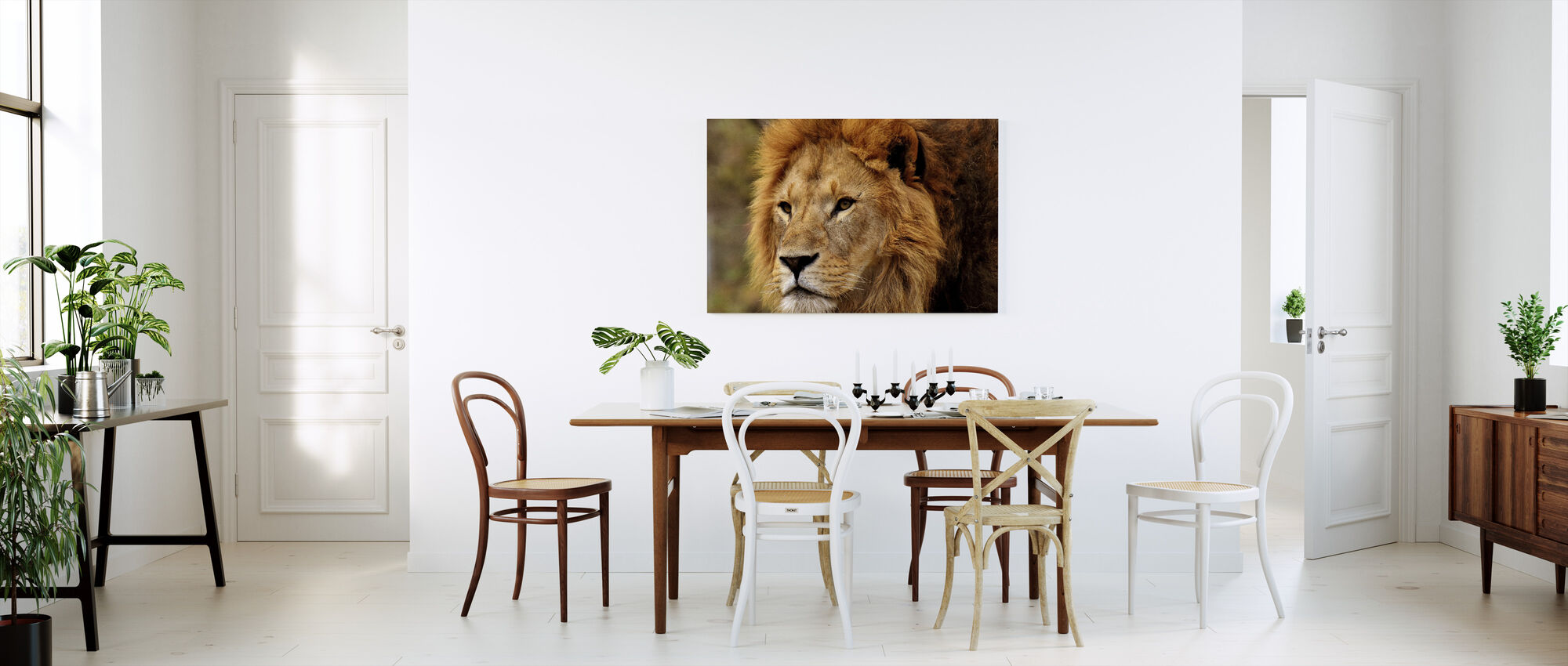 Leeuw staren - Canvas print - Keuken
